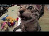 позитивно смеющейся котик
