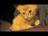 Котёнок-пикачу ^___^