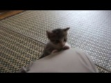 Очень забавный смешной маленький котенок)